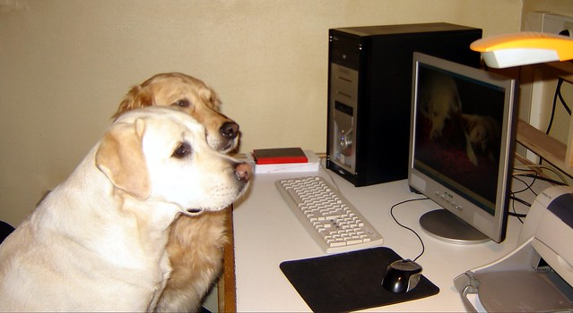 dog using a computer labrador