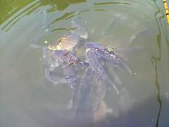 今日の清遊湖