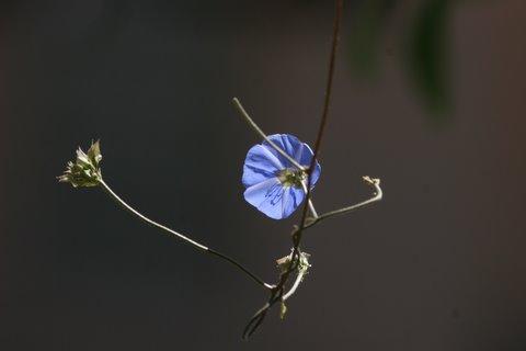 Bandipur flower 8 jun 07