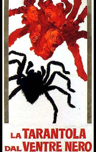 black belly tarantula