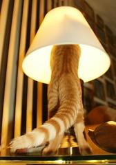 The Freddie Lamp