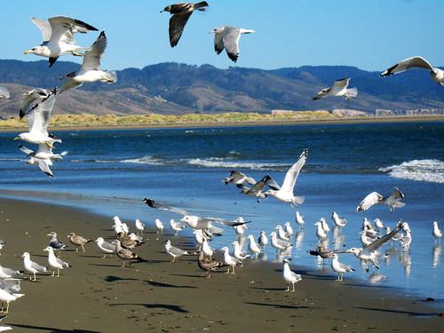 birds at the mouth of drake's estero