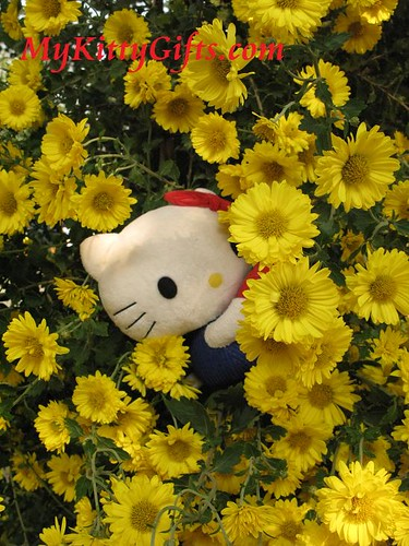 Hello Kitty Hiding in Yellow Chrysanthemum Hedge in Hong Kong Orchid Trip