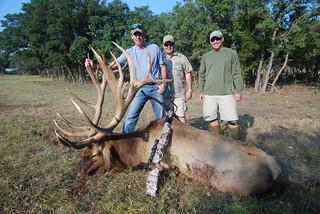 Elk 484