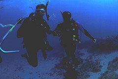 Palm Beach SCUBA Diving