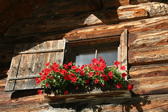 Window under the roof (rotraud_71) Tags: flowers red salzburg window austria bees woodenhouse blueribbonwinner kolmsaigurn beautifulcapture colorphotoaward impressedbeauty raurisertal diamondclassphotographer naturewatcher