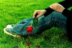 Waiting for you (YOUSEF AL-OBAIDLY) Tags: flower art love rose photo kuwait وردة artphoto حب فوتو aplusphoto kuwaitphoto amazingamateur kvwc kuwaitartphoto kuwaitart ارتفوتو kuwaitvoluntaryworkcenter مركزالعملالتطوعي teacheryousef يوسفالعبيدلي
