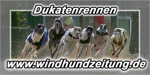 Greyhounds - Dukatenrennen, Sachsenheim