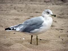 IMG_0930 (mr.seymour) Tags: summer asburypark boardwalk jerseyshore oceangrove