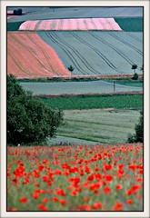Hildesheim Boerde:  landscape + poppy field     05.1045.40 (Juergen Kurlvink) Tags: trip red green rot field germany landscape geotagged deutschland europa europe saxony feld felder meadow meadows wiese wiesen poppy poppies fields 1992 ausflug lower grn landschaft allemagne gruen nds hildesheim polaris brd mohn juergen niedersachsen brde goldaward encarnado mywinners platinumphoto diamondclassphotographer 0fav excapture theperfectphotographer kurlvink boerde kurli1 ourmasterpieces qualitypixels 0allok