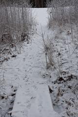 snow in my path (Stefan Sundkvist) Tags: vinter snö stig linköping sn linkping