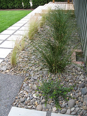 Midcentury Ranch Grasses (Third Nature Studio) Tags: ranch modern garden landscape design path patio pavers midcentury