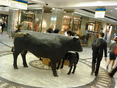 Byron Bull in Cabot Place