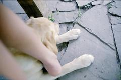 ef_32 (mariczka) Tags: dog slr film analog 50mm eva legs pavement f14  mylegs thelongestday canonef lawnstories canonlensfd agfapro200n vintageanalogue