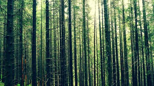 フリー写真素材, 自然・風景, 森林, 樹木, グリーン,