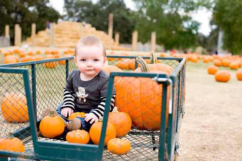 Noah in the pumpkins 10