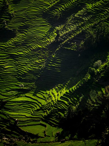 terraces in china. terraces, Yunnan, China by