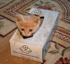 Kitten in tissue box (Mishari Al-Reshaid Photography) Tags: cats pets art animals canon photo kitten feline kittens kuwait digitalrebel cuteanimals xti mishari digitalrebelxti kuwaitartphoto misharialreshaid malreshaid misharyalrasheed