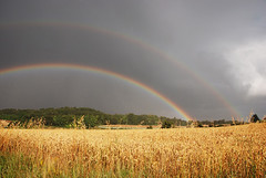 Arc en ciel sur un champ de ble / rainbow over a wheat field (Laurence TERRAS) Tags: sky storm france nature rain clouds landscape rainbow nikon pluie explore ciel nuages paysage drome orage champ arcenciel 1000views ble supershot flield 1500views d80 francelandscapes flickrelite
