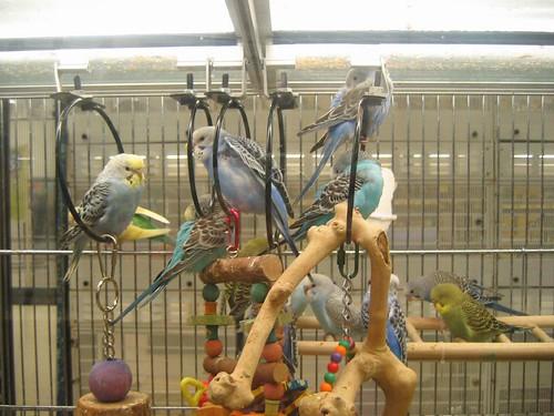 Petsmart Birds