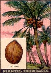 pl tropic 11