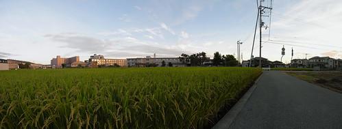Panorama--Rice field at Kakogawa today--Stitched_001