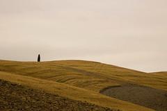 Tuscany (Andrea Rinaldi) Tags: italy landscape italia eu it tuscany siena toscana valdorcia mont monti sienasud