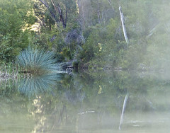 Misty creek (1) (dicktay2000) Tags: bluemountains glenbrook abigfave anawesomeshot irresistiblebeauty