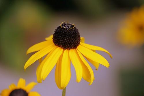 Banal Flower Shot