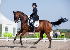 IMG_5562 (White Bear) Tags: horses horse animals russia contest russian equestrian equine artem dressage       i   makeev