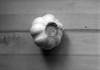 Garlic (perminna) Tags: shadow blackandwhite 120 film kitchen monochrome mediumformat iso100 645 150 garlic rodinal vivitar analogphotography no2 onthetable 1000s extensiontube kodaktmax100 orangefilter homedeveloped tmx100 80mmf28 mamiyam645 15min epsonv700 20°c mamiyasekorc orange02 filmdev:recipe=6174