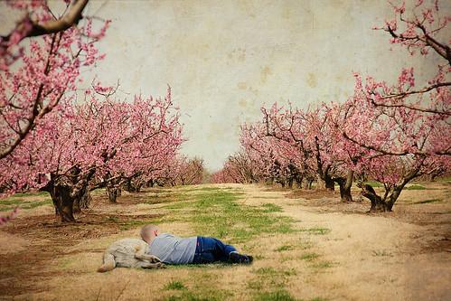 Orchard Nap