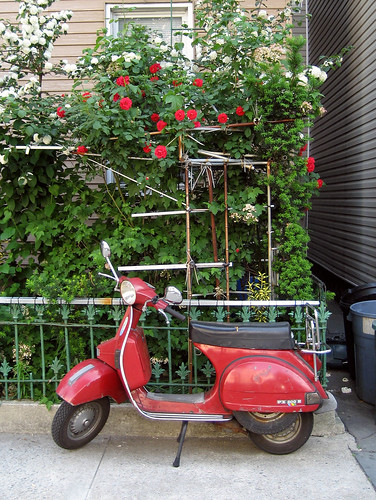 Moped and roses