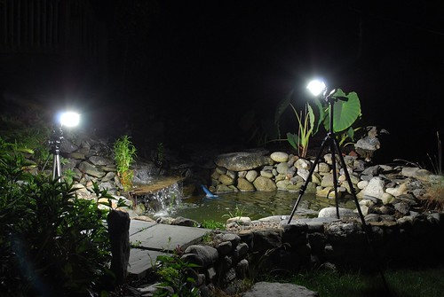 Frog/Pond - Lighting