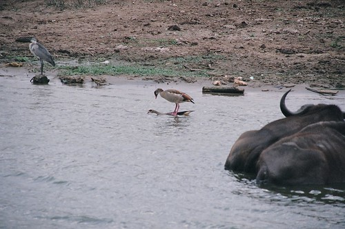 Uganda - QENP Rich Bird Life Mating