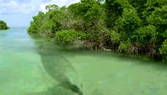 Basilosaurus in Sahara mangrove hunting place