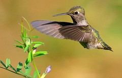 Bird Watching in Eureka Springs 1