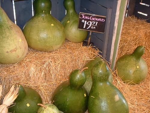 Jug Gourds