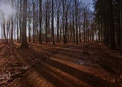The day I smiled all day (Kirsten M Lentoft) Tags: trees sun sunlight forest denmark shadows silhouettes lyngby nymølle kirstenmlentoft newgoldenseal
