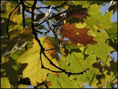 Forever autumn (Ameliepie) Tags: autumn shadow music tree fall nature colors leaves season lyrics october branch song album band 2010 moodyblues foreverautumn