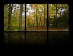 FOREST REFLECTIONS (mark_rutley) Tags: autumn trees tree fall leaves forest hampshire forestofbere