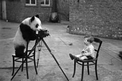 panda takes pic