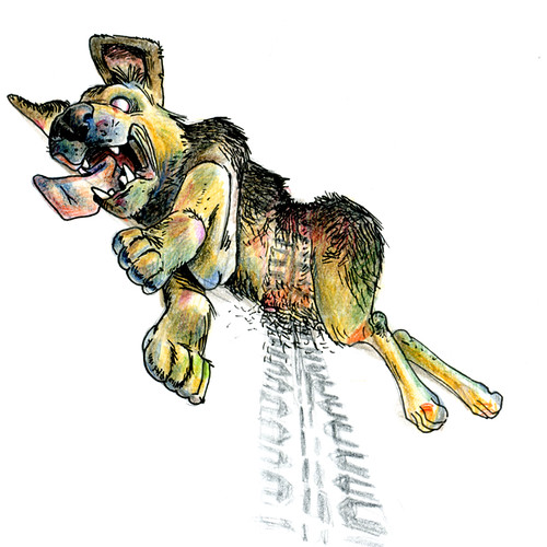 """Perro Atropellado • <a style=""""font-size:0.8em;"""" href=""""http://www.flickr.com/photos/8565265@N03/649621893/"""" target=""""_blank"""">View on Flickr</a>"""