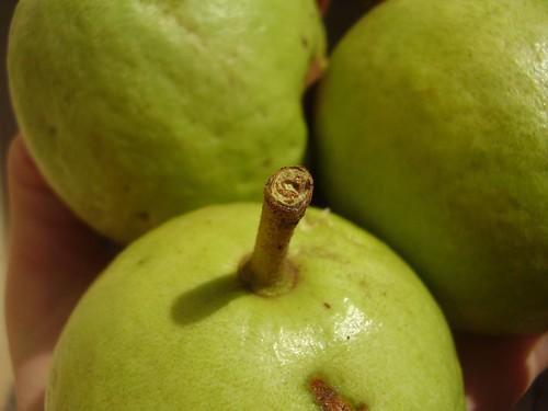 Guavas1