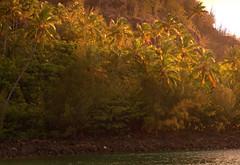 Ke'e Beach (erikakay) Tags: ocean blue sunset sea summer sun mountains tree beach water garden island hawaii coast sand surf kayak sailing coconut scuba hike palm na jungle kayaking kauai tropical shaka backlit tunnels sunlit pali swimsuit aloha napali hanalei kee