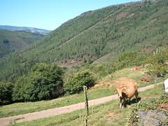 cornollo 0.5 043 (cornollo05) Tags: asturias aldea allande cornollo