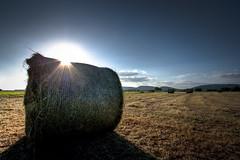 Shine on (think4d) Tags: blue autumn summer sky sun nature field canon landscape farm empty harvest silo flares hdri siloballen