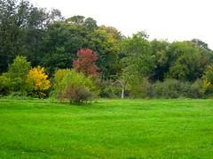 verde autunno