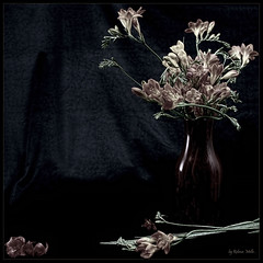 The delicacy of some freesias ... (Rebeca Mello) Tags: stilllife flower photoshop canon flor study exotic legacy vaso freesia estdio artdigital cs5 eos50d canoneos50d frsia rebecamello rebecamcmello daarklands magicunicornverybest selectbestexcellence sbfmasterpiece pinnaclephotography
