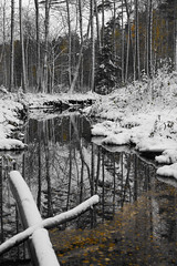 Autumn forest (HibaHaba) Tags: autumn trees blackandwhite snow cold reflection water yellow forest suomi finland sadness mirror woods melancholy firstsnow blackwater vesi mets syksy selectivecolor mntyharju calmwater heijastus oja ensilumi hintofcolor peilityyni